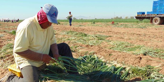 productores agricolas
